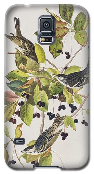 Black Poll Warbler Galaxy S5 Case by John James Audubon