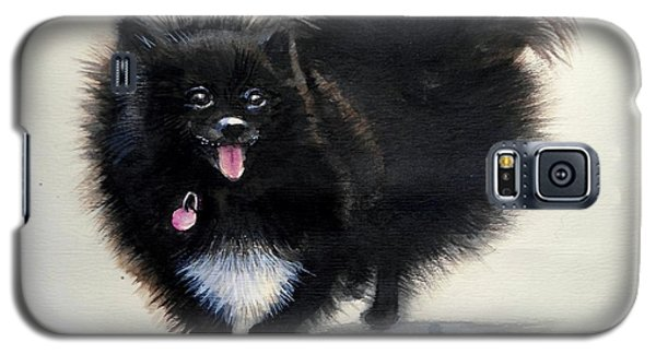 Black Pomeranian Dog 3 Galaxy S5 Case