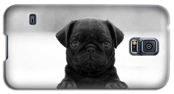 Black Pug Galaxy S5 Case by Sumit Mehndiratta