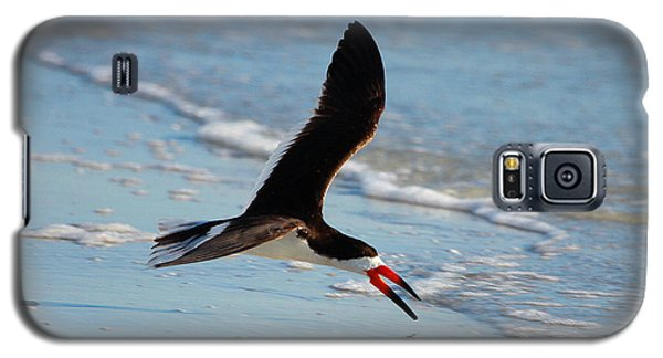 Black Skimmer Galaxy S5 Case