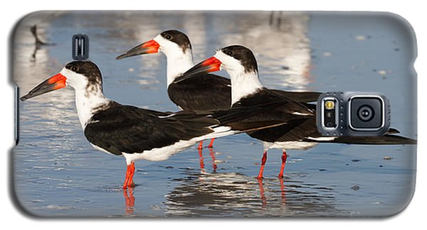 Black Skimmer Birds Galaxy S5 Case by Chris Scroggins