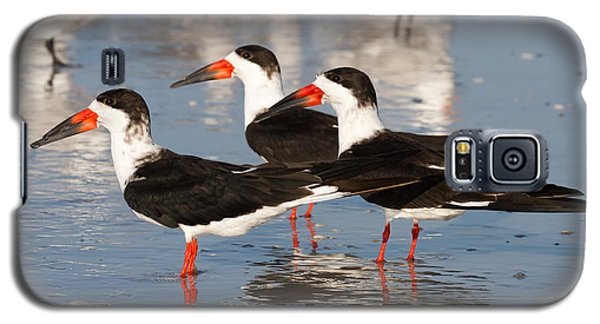 Black Skimmer Birds Galaxy S5 Case