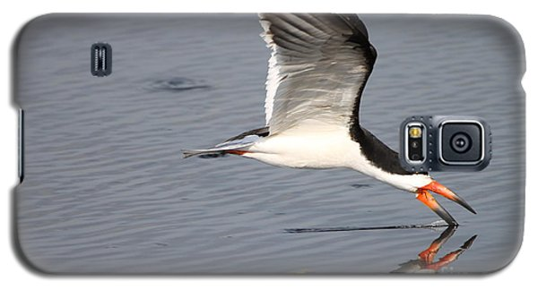 Black Skimmer And Reflection Galaxy S5 Case