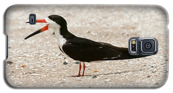 Black Skimmer On Assateague Island Galaxy S5 Case