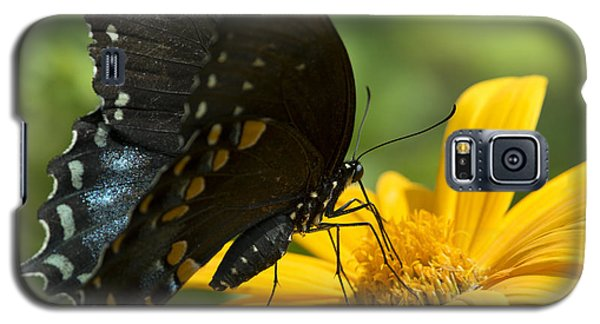 Black Swallowtail Drinking Galaxy S5 Case