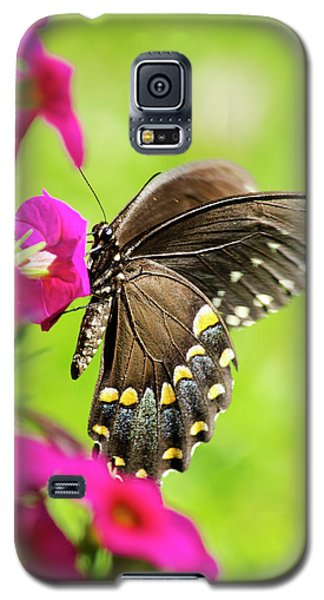 Galaxy S5 Case featuring the photograph Black Swallowtail Butterfly by Christina Rollo