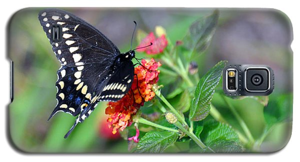 Galaxy S5 Case featuring the photograph Black Swallowtail by Kay Lovingood