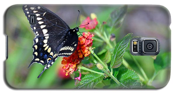 Black Swallowtail Galaxy S5 Case