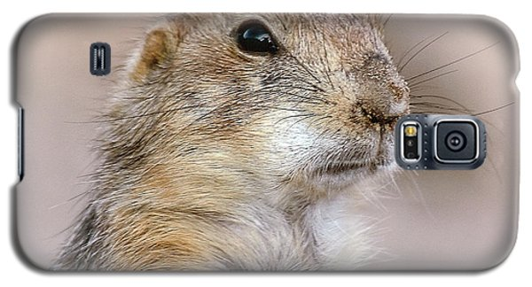 Black Tail Prairie Dog Galaxy S5 Case by Elaine Malott
