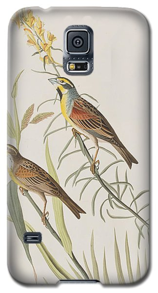 Bunting Galaxy S5 Case - Black-throated Bunting by John James Audubon