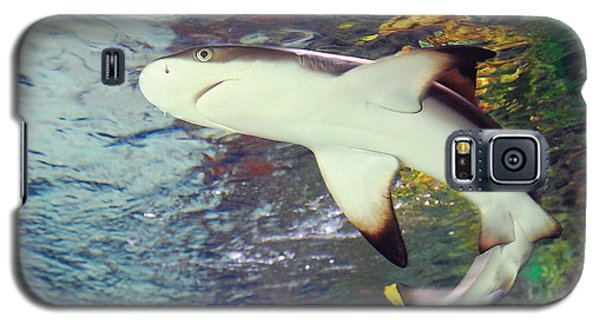 Black Tipped Reef Shark-1 Galaxy S5 Case