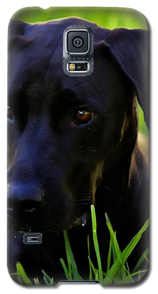 Black Velvet Galaxy S5 Case