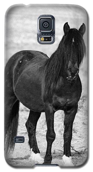 Black Wild Mustang Stallion Galaxy S5 Case