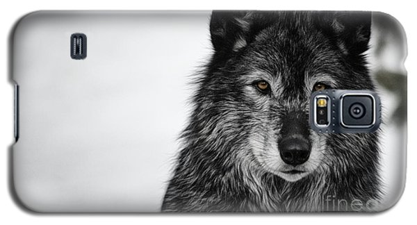 Black Wolf I Galaxy S5 Case