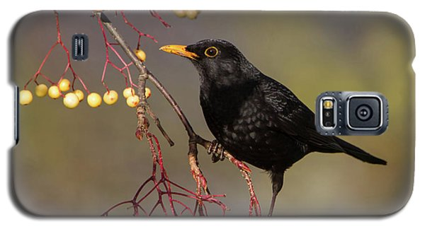 Blackbird Yellow Berries Galaxy S5 Case