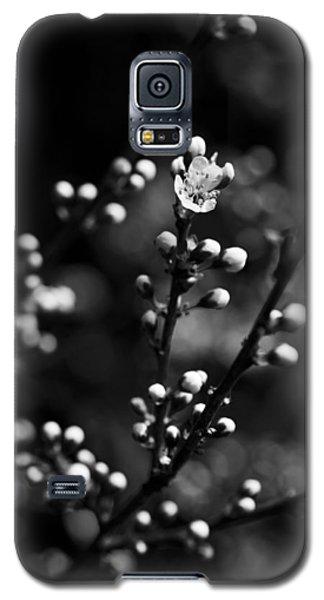 Blackthorn Flower Galaxy S5 Case