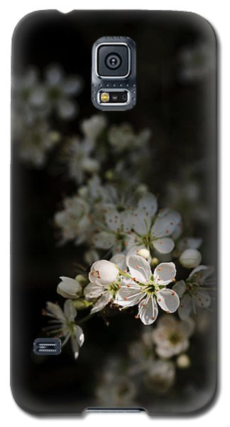 Blackthorn Flowers Galaxy S5 Case