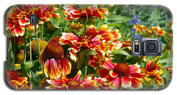 Blanket Flowers Galaxy S5 Case by Sharon Talson