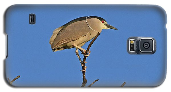 Black-crowned Night Heron Galaxy S5 Case