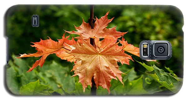 Blazing Maple Leaves Galaxy S5 Case