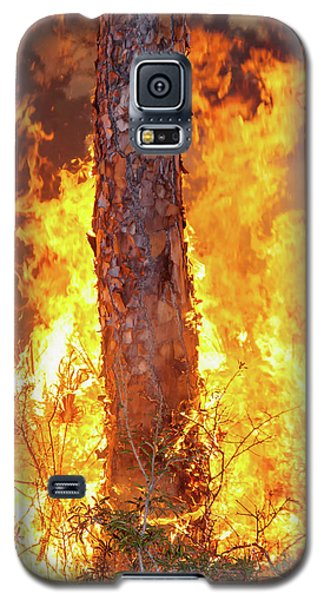 Galaxy S5 Case featuring the photograph Blazing Pine by Arthur Dodd