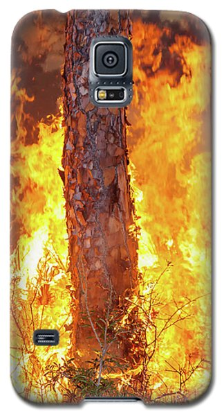 Blazing Pine Galaxy S5 Case
