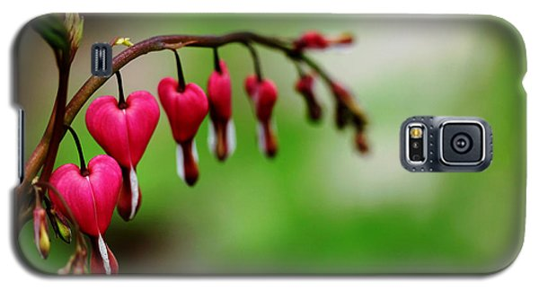 Galaxy S5 Case featuring the photograph Bleeding Hearts Flower Of Romance by Debbie Oppermann