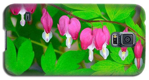 Bleeding Hearts Galaxy S5 Case by Tiffany Erdman