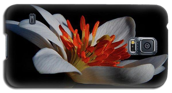 Bloodroot Art Galaxy S5 Case