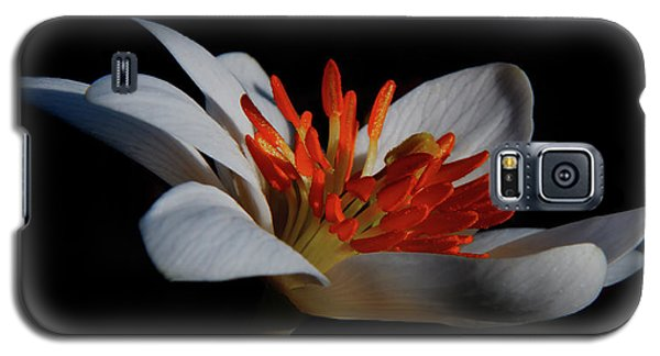Bloodroot Art Galaxy S5 Case