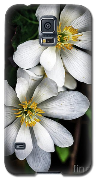 Galaxy S5 Case featuring the photograph Bloodroot In Bloom by Thomas R Fletcher