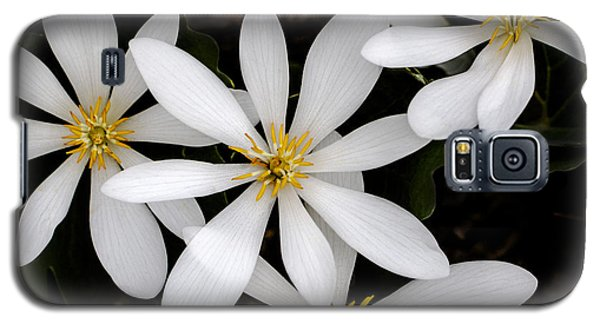 Galaxy S5 Case featuring the photograph Sanguinaria by Skip Tribby