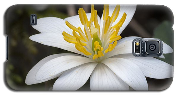 Galaxy S5 Case featuring the photograph Bloodroot by Tyson and Kathy Smith