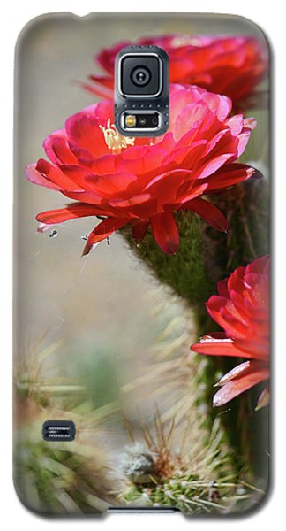Galaxy S5 Case featuring the photograph Bloomin' Cacti by Barbara Manis