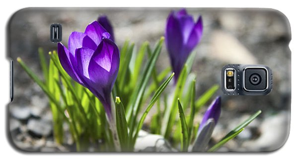 Galaxy S5 Case featuring the photograph Blooming Crocus #1 by Jeff Severson