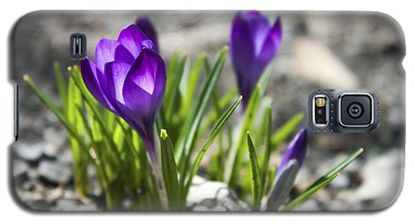 Blooming Crocus #1 Galaxy S5 Case