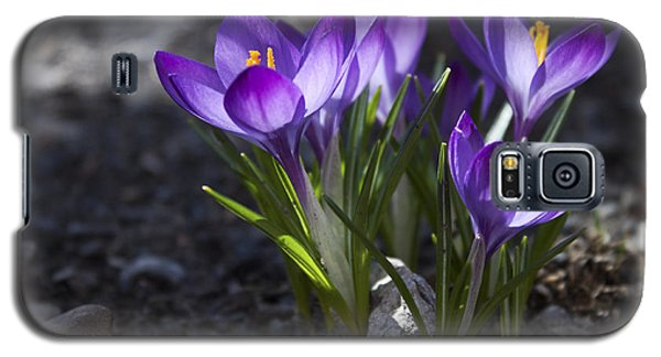 Galaxy S5 Case featuring the photograph Blooming Crocus #2 by Jeff Severson