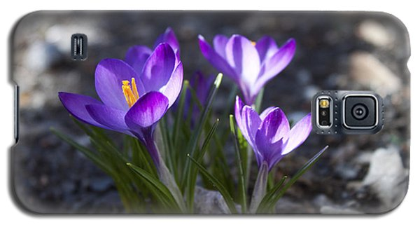 Galaxy S5 Case featuring the photograph Blooming Crocus #3 by Jeff Severson