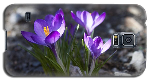 Blooming Crocus #3 Galaxy S5 Case