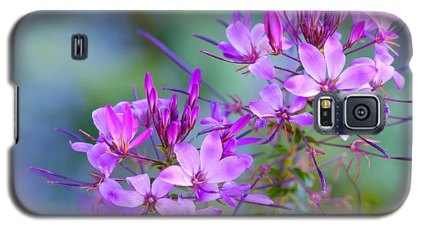 Galaxy S5 Case featuring the photograph Blooming Phlox by Alana Ranney