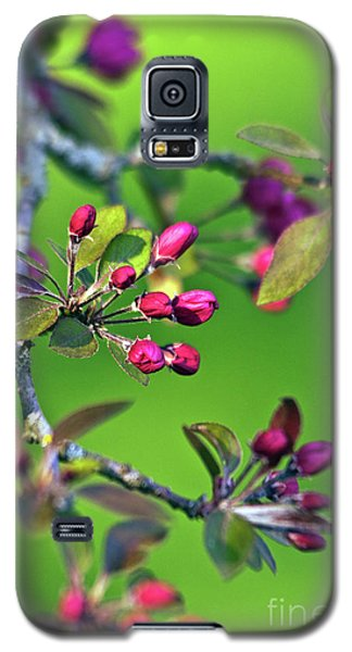 Blooming Spring Poetry Galaxy S5 Case