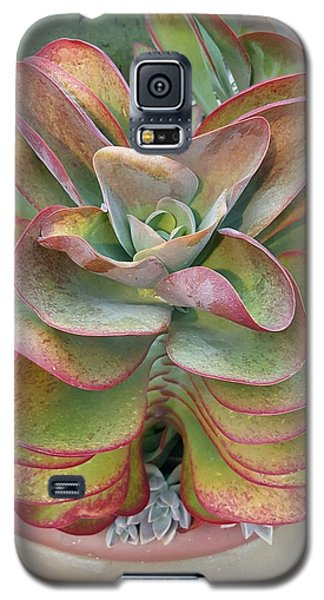 Blooming Succulent Galaxy S5 Case by Ian Kowalski