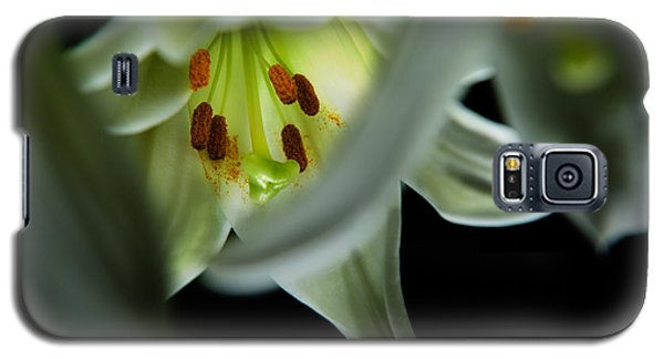 Blooming White Lily Closeup Galaxy S5 Case