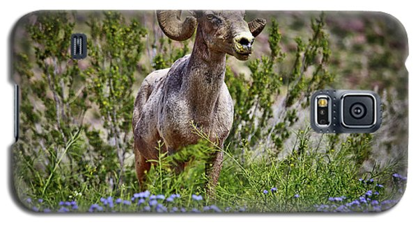 Blooms And Bighorn In Anza Borrego Desert State Park  Galaxy S5 Case