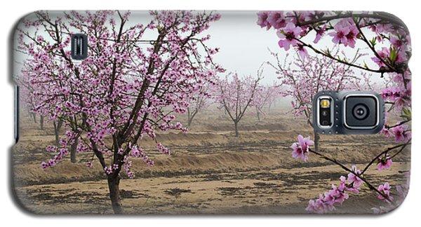 Blossom Trail Galaxy S5 Case