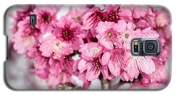 Blossoms 3 Galaxy S5 Case