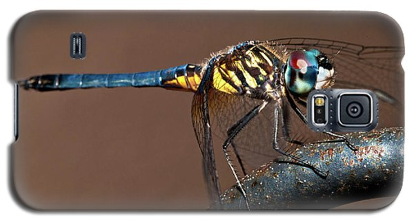 Blue And Gold Dragonfly Galaxy S5 Case