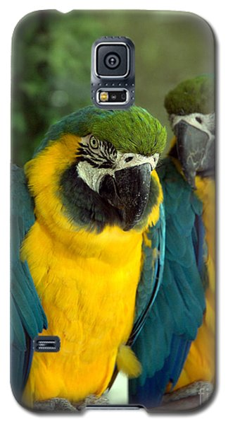 Blue And Gold Macaws Galaxy S5 Case