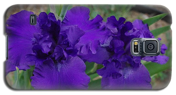 Blue Bearded Irises Galaxy S5 Case by Robyn Stacey