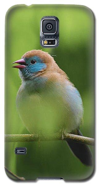 Blue Bird Chirping Galaxy S5 Case